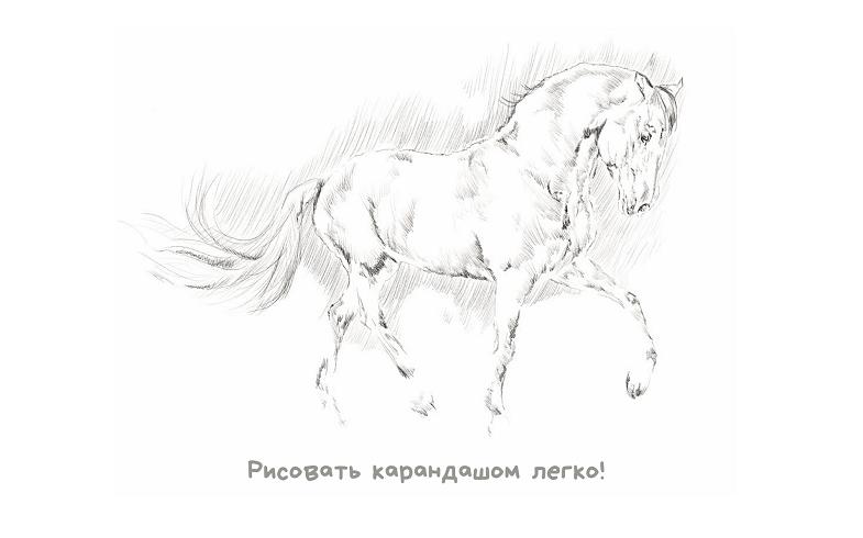 Как научиться рисовать поэтапно карандашом для начинающих.